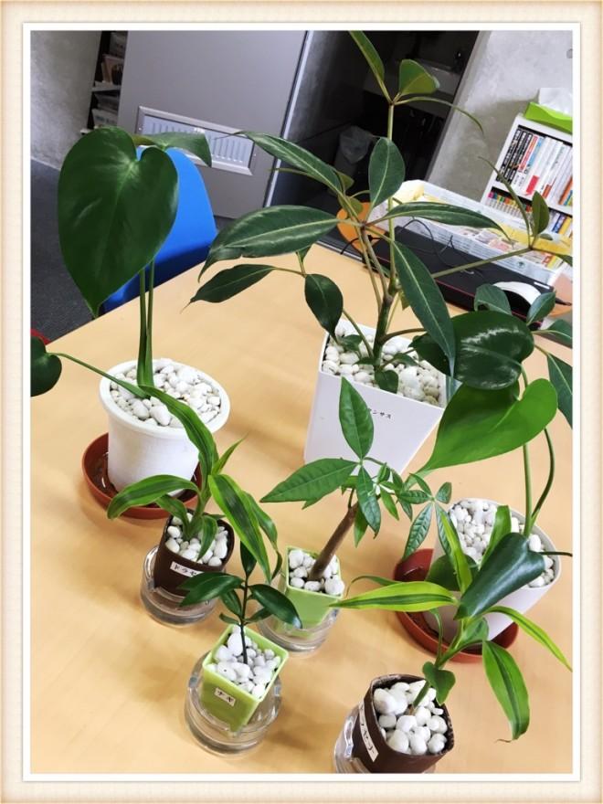 ティオ新大牟田の観葉植物をご紹介します!