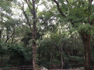 森林浴でマイナスイオンを感じよう
