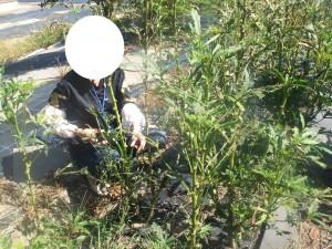 農業体験で野菜を収穫!