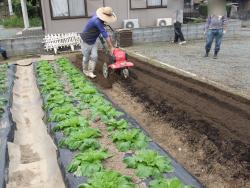農業体験2日目ですっ!
