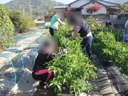 農業体験プログラム開催っ!