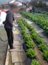 農業体験プログラム開催っ♬