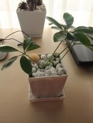 自宅に観葉植物を置こう