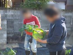 農業体験プログラム開催