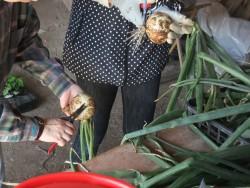 農業体験プログラム