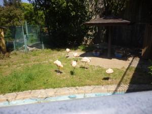 春の動物園を訪ねよう????