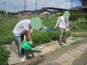農業体験を行いました🍁